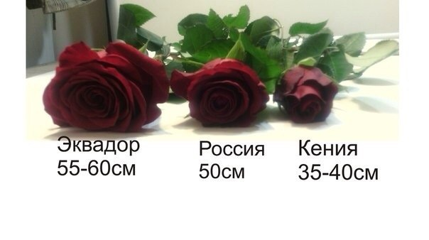 buket-101-101-roza-sankt-peterburg-sayt-magazine-obi