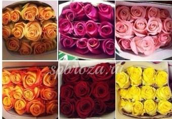 В спб купить цветы оптом