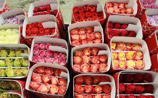 Цветы оптом купить недорого