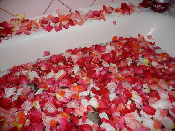 Купить лепекстки розы сфл доставка цветов
